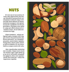 Nuts nutrition information poster of raw vector