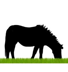 Pony grazing vector