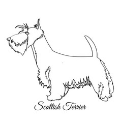 Scottish terrier dog coloring vector