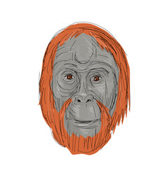 Unflanged male orangutan drawing vector