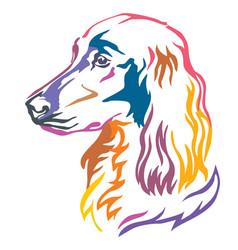 Colorful decorative portrait of dog irish setter vector