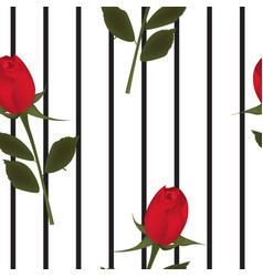 red rose on stripped background vector image