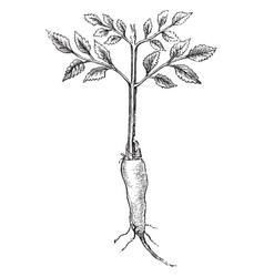 Root grafting vintage vector
