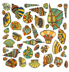 Seashell set collection vector image