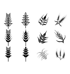 black wheat icons set vector image