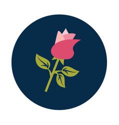flat rose flower gift on white background vector image