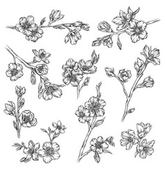 flowers and plants collection monochrome floral vector image