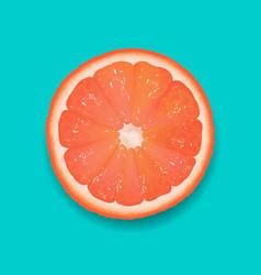 grapefruit segment mint background vector image