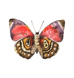 Spotted beautiful watercolor butterfly vector image
