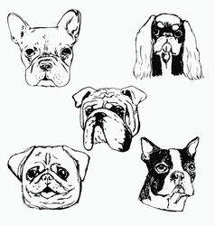 dog hand drawn dog portraits vector image