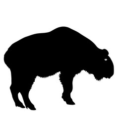 silhouette of the bison on a white background vector image