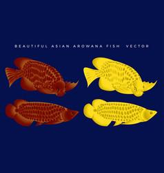Beautiful arowana fish bundle set vector