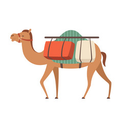 Camel desert animal carrying heavy load side view vector
