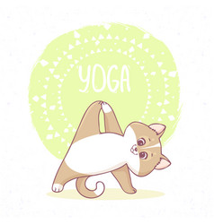 Cat yoga vector
