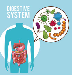 Digestive system poster vector