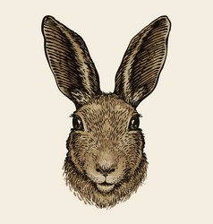 Easter bunny portrait of hare sketch vintage vector