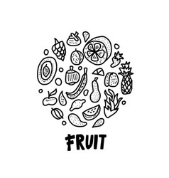 fruit concept in doodle style vector image