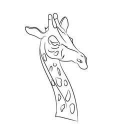 giraffe graphic lines vector image