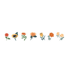 set fall garden flowers isolated on white vector image