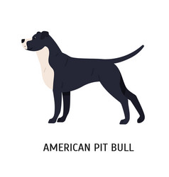 American pit bull terrier large smart catch dog vector