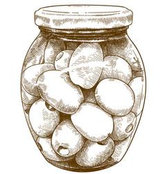 engraving olives bottle vector image