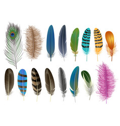 feather icon set realistic style vector image
