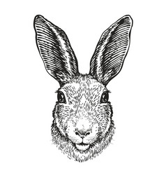 Hand-drawn portrait of rabbit easter bunny vector