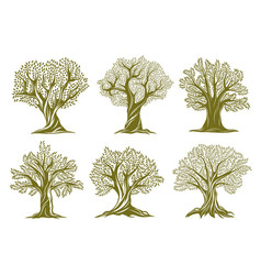 old olive willow or oak trees engraved icons vector image