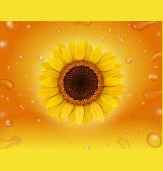 realistic sunflower on yellow background vector image