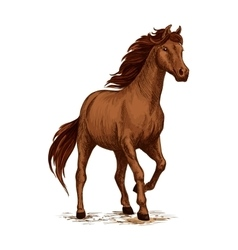 Running horse sketch with brown arabian stallion vector