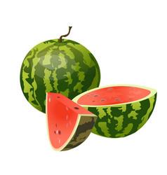 whole half and slice watermelon vector image