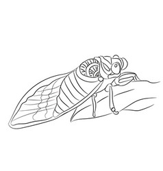 fly graphic line vector image vector image