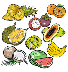 Set of color doodle of tropical fruit vector