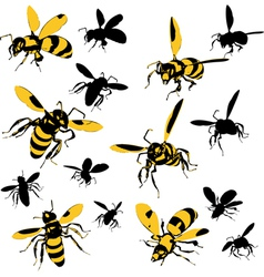 wasps vector image