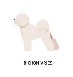 Bichon frise adorable funny purebred companion or vector