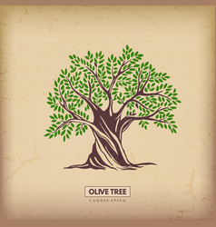 Olive beautiful tree vector