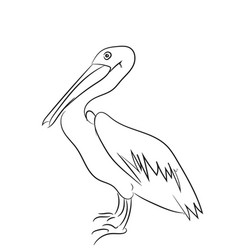 pelican graphic line vector image