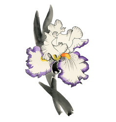Watercolor iris flower isolated on vector