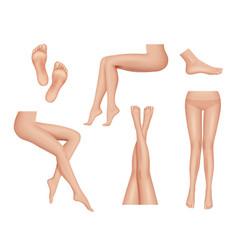 Woman legs beauty foot heel healthy skin anatomy vector