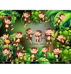 Monkeys doing different things in the jungle vector image vector image