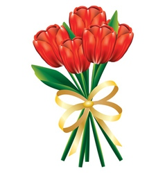 Tulip bouquet with bow vector image