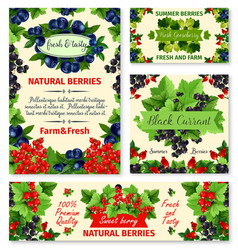 berry summer fruit banner and poster template set vector image
