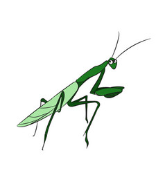 mantis color vector image