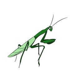 mantis color vector image vector image
