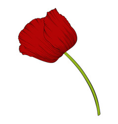 beautiful red poppy in a hand-drawn graphic style vector image