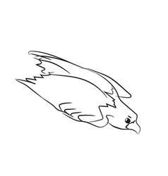eagle flies graphic line vector image