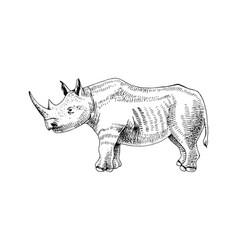 hand drawn rhinoceros vector image