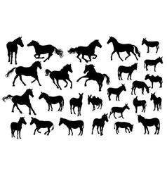 Horse Donkey and Zebra Silhouettes vector image