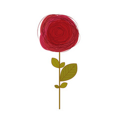 red rose in white background vector image vector image