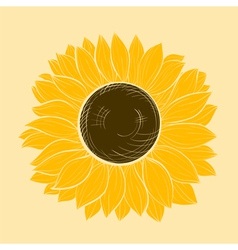 beautiful sunflower isolated vector image